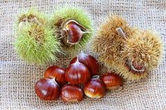Castañas españolas (castañas dulces) Fotos de archivo libres de regalías