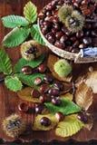 Castañas dulces Fotos de archivo libres de regalías