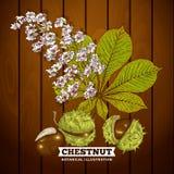 Castagna Autumn Botanical Vector Illustration Fotografia Stock