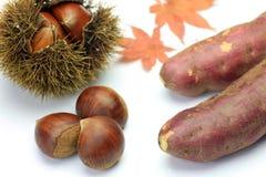 Castagna e patata dolce Fotografia Stock Libera da Diritti