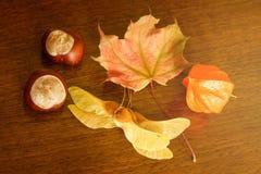 Castagna, physalis e foglie di autunno Fotografia Stock Libera da Diritti