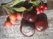 Castagne e bacche rosse selvatiche sul bordo di legno Fotografia Stock