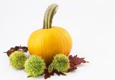 Castagne e zucca di autunno Fotografia Stock Libera da Diritti