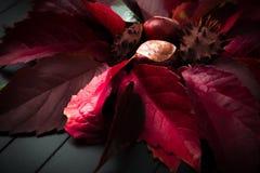Castagne in foglie di autunno Fotografia Stock