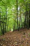 Castagne, foresta dell'acero e - Immagine Stock Libera da Diritti