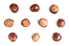 Castagne o aesculus hippocastanum o frutta a guscio del conker isolate su fondo bianco immagine stock libera da diritti