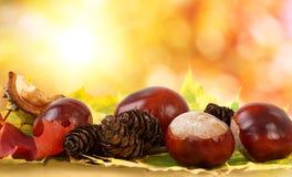 Castagne variopinte dei fogli di autunno e coni del pino Fotografie Stock Libere da Diritti