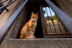 Castagneto Carducci, Leghorn, Italia - gato en la ventana Foto de archivo libre de regalías