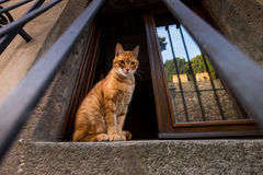 Castagneto Carducci, Leghorn, Italy - cat at the window. Castagneto Carducci is one of the most popular towns on the Etruscan Coast, Leghorn, Italy, cat at the Royalty Free Stock Photo