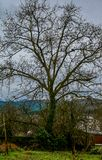 Castagno senza foglie nell'inverno con il cielo nuvoloso in un villaggio con le montagne nel fondo immagini stock libere da diritti