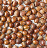 Castanea chestnuts Royalty Free Stock Image