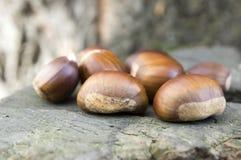Castanea sativa, плодоовощи maroon сладостного каштана Стоковое фото RF