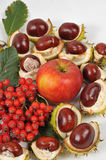 A castanha, uma maçã e as folhas, queda estão vindo Imagem de Stock Royalty Free