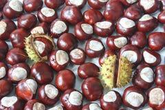 Castanhas-da-índia Imagens de Stock