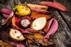 Castanhas-da-índia e Autumn Leaves, Oxford Reino Unido Fotos de Stock