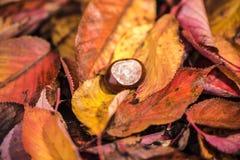 Castanhas-da-índia e Autumn Leaves, Oxford Reino Unido Imagem de Stock