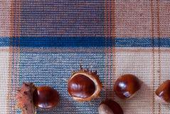 Castanhas-da-índia em um fundo da tela Imagens de Stock