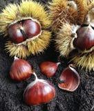 Castanhas e castanhas em shell pontudo Fotos de Stock Royalty Free