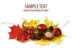 Castanhas e pinecones coloridos das folhas de outono Foto de Stock Royalty Free