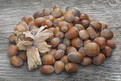 Castanhas, fruto da árvore de castanhas & x28; Sativa& x29 do Castanea; Imagem de Stock