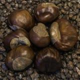 Castanhas no pebblesstone Imagens de Stock