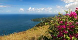 Castara bay and flowers - Caribbean sea. Republic of Trinidad and Tobago - Tobago island - Castara bay and flowers - Caribbean sea royalty free stock image
