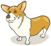 Castas del perro: Corgi Galés del Pembroke ilustración del vector