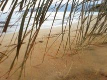 Castaway Piaskowatej plaży palma Obrazy Royalty Free