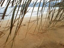 Castaway Sandy Beach Palm. Palm frond curtain on golden sandy beach facing the ocean with footprints in the sand on tropical island Royalty Free Stock Images