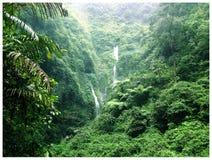 Castaway Waterfall. A view of Madakaripura Waterfall Indonesia Stock Photos
