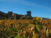 Castel en viñedo Imagen de archivo