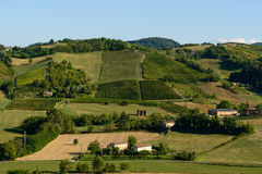 Castell'Arquato vineyards view Stock Images