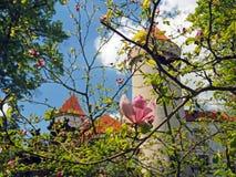 Castello ceco di andata del castello dello stato del fiore alto vicino della magnolia di rosa fotografia stock