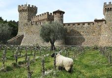 Castello di Amorosa Vinodling i Napa Valley royaltyfri foto