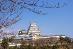 Castello di Himeji durante il tempo del fiore di ciliegia fotografia stock