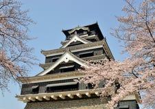 Castello di Kumamoto con sakura Immagine Stock Libera da Diritti