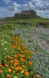 Castello di Lindisfarne e dei tageti Immagine Stock