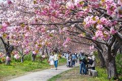Castello di Matsumae Fotografie Stock