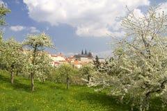 Castello di Praga Immagini Stock