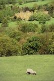 Castello di Sudeley Immagine Stock Libera da Diritti