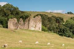 Castello di Thirlwall con le pecore Fotografia Stock Libera da Diritti