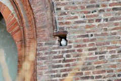 Castello di Visconteo fotografie stock