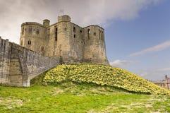 Castello di Warkworth con i daffodils Immagine Stock Libera da Diritti