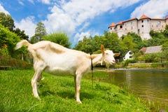 Castello di Zuzemberk, destinazione turistica slovena Fotografie Stock