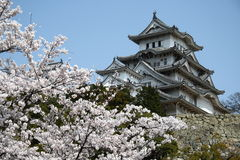 Castello fra i fiori di ciliegia fotografia stock libera da diritti