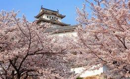 Castello giapponese e bello fiore fotografie stock libere da diritti
