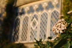 Castello irlandese medievale con i fiori rosa Immagini Stock Libere da Diritti