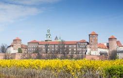 Castello reale di Wawel con i fiori gialli nella priorità alta durante fotografia stock
