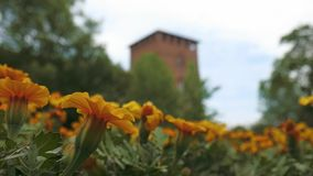 Castello Visconteo kasztel z kolorem żółtym kwitnie na przedpolu w Pavia, PV, Włochy zbiory wideo