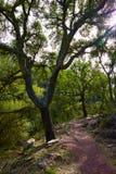Castellon alcornocal in Sierra Espadan cork trees Royalty Free Stock Photo